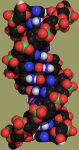 A model of DNA. Image: Paul A. Thiessen (www.chemicalgraphics.com)